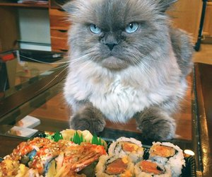cat, sushi, and food image