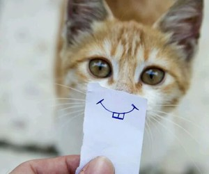 cat, smile, and cute image