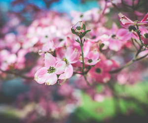 floral, flowers, and nature image