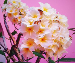 colorful, flores, and pink image