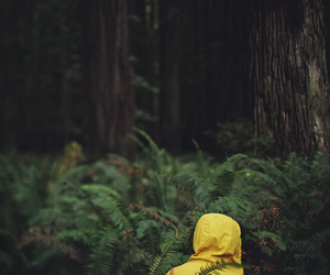forest, nature, and yellow image