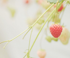 strawberry, cute, and nature image