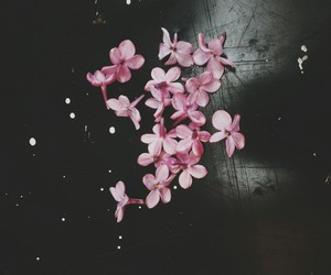 black, flower, and pink image