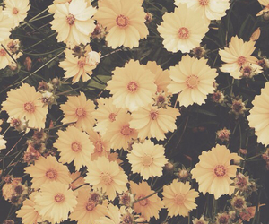 cool, flowers, and yellow image