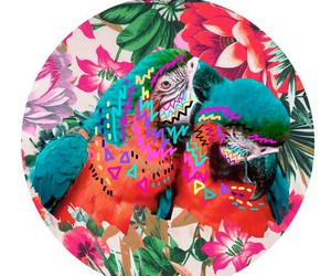 parrot, background, and bird image