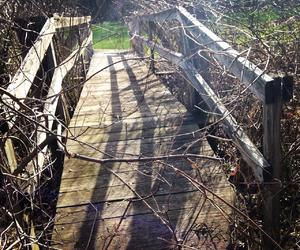 bridge, spring, and pretty image