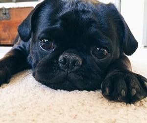animal, black, and cute image