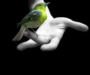 bird, green, and hand image