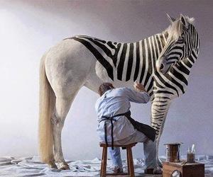 caballo, negro, and cebra image