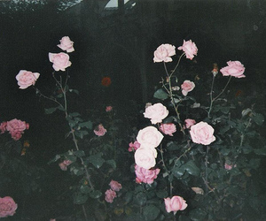 flowers, rose, and grunge image