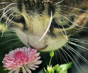 cat, flowers, and photography image
