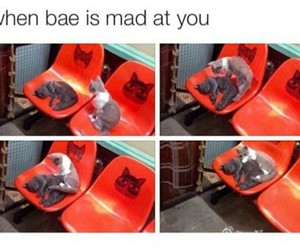 cat, bae, and love image