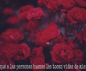 flores, frases, and mierda image