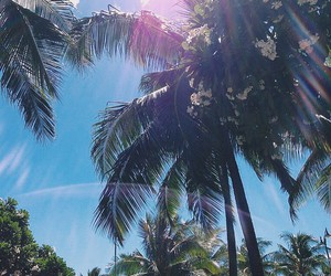 palms, sky, and beach image