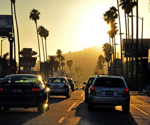 hollywood, palm trees, and Road Trip image