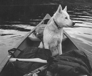 dog, black and white, and boat image