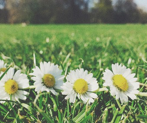 daisy chain and spring image
