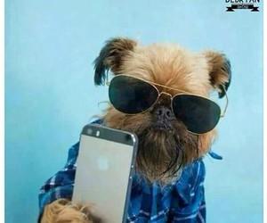 dog, cool, and lol image