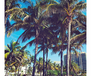 holiday, Miami, and palm image