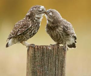 cute, love, and bird image