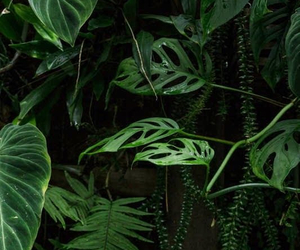 exotic, green, and fern image