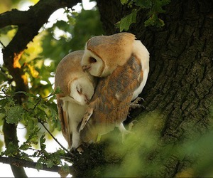 owl, love, and nature image
