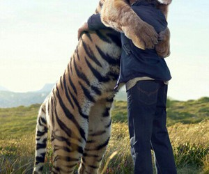man, tiger, and friends image