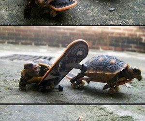 turtle, animal, and skateboard image