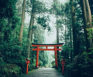 forest, tokyo, and japan image