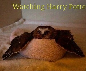animals, harry potter, and watching image