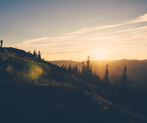sunset, nature, and trees image