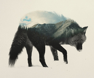 animal, animals, and forest image