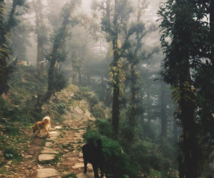 dogs, woods, and forest image