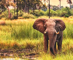elephant, animal, and zoo image