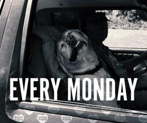 monday, dog, and funny image