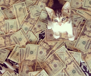 cat, adorable, and cash image