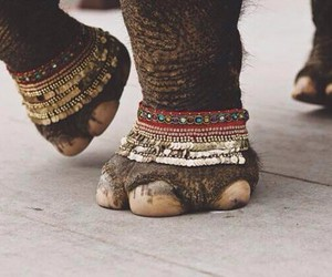 elephant, boho, and hippie image