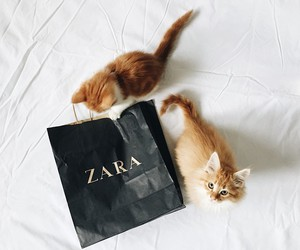 cat, Zara, and cute image