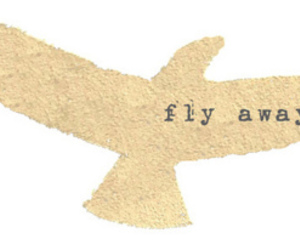 bird and fly image