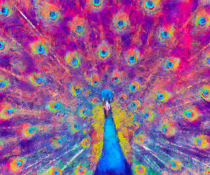peacock, art, and colorful image