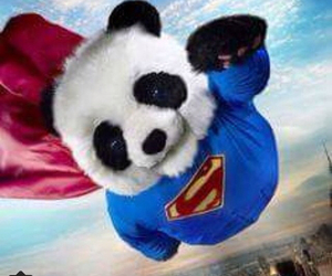 panda, cute, and superman image