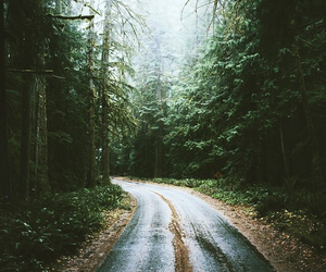 forest, alone, and dark image