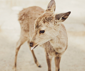 baby deer, deer, and fawn image