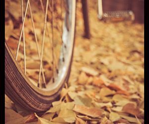 art, autumn, and bicycle image