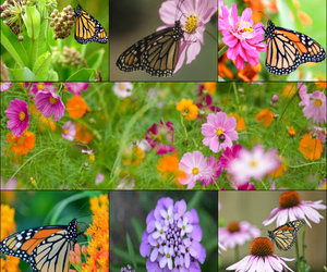 butterfly, spring, and butterflys image