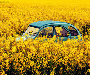 car, summer, and yellow image