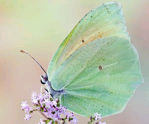butterfly, flowers, and green image