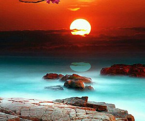 sunset, nature, and flowers image