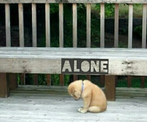 adorable, alone, and sad puppy image
