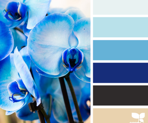 blue, color, and color inspiration image